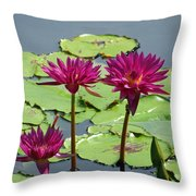 Flower Garden 57 Throw Pillow