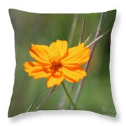 Flower Lit By The Sun's Rays Throw Pillow
