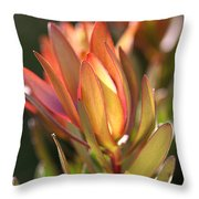 Flower-protea-bloom Throw Pillow