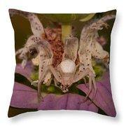 Flower Spider On Horsemint #2 Throw Pillow