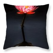 Flower - Water Lily - Nymphaea Jack Wood - Reflection Throw Pillow