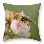 Flowerfly On Blueberry Blossom Throw Pillow