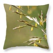 Flowering Brome Grass Throw Pillow