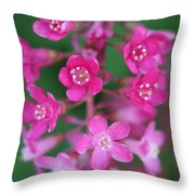 Flowering Currant Throw Pillow