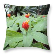 Flowering Red Ginger Plant Throw Pillow