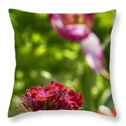Flowers At Dallas Arboretum V14 Throw Pillow