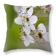 Flowers - Blossoms Throw Pillow