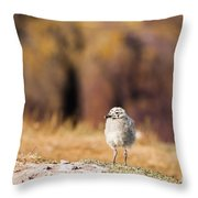 Fluffball Watching Throw Pillow by Anne Gilbert