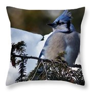 Fluffy Blue Jay Throw Pillow