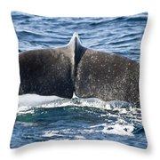 Flukes Of A Sperm Whale Throw Pillow