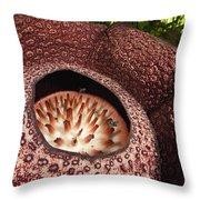 Fly Pollinating Rafflesia Sabah Borneo Throw Pillow