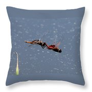Togetherness Fly United 7 Throw Pillow