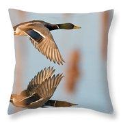 Skimming The Pond Through Cattails Throw Pillow
