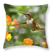 Flying Scintillant Hummingbird Throw Pillow