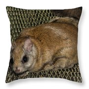 Flying Squirrel On The Feeder Throw Pillow