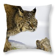 Focusing Throw Pillow