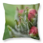 Fog Nourished Throw Pillow