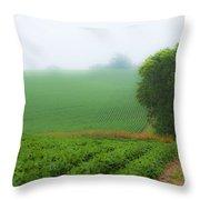 Foggy Bean Field Throw Pillow