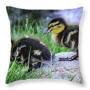 Follow The Leader Ducky Style Throw Pillow