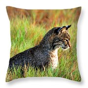 Food In Sight  Throw Pillow