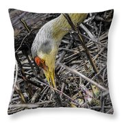 foraging for wild edibles Sandhill Crane Throw Pillow