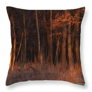 Forest At Sunset Throw Pillow
