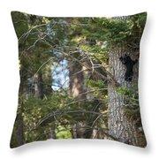 Forest Black Bear Cub Throw Pillow