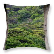Forest Canopy Through The Window Of The Ruins Throw Pillow