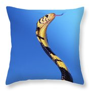 Forest Cobra Naja Melanoleuca Throw Pillow