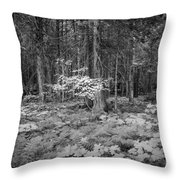 Forest Floor Glacier National Park Bw Throw Pillow