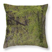 Forest Glimpse Throw Pillow