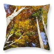Forest In Autumn Bavaria Throw Pillow