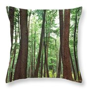 Forest In Early Morning, Wetlands Throw Pillow