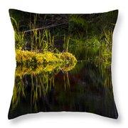 131005b-044 Forest Marsh 1 Throw Pillow