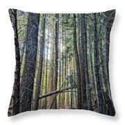 Forest Morning Throw Pillow