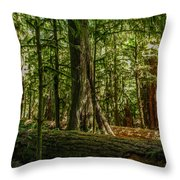 Forest Of Cathedral Grove Collection 1 Throw Pillow