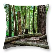 Forest Of Cathedral Grove Collection 2 Throw Pillow