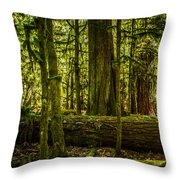 Forest Of Cathedral Grove Collection 3 Throw Pillow