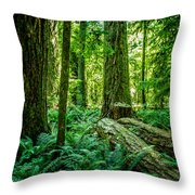 Forest Of Cathedral Grove Collection 8 Throw Pillow
