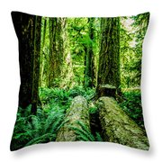 Forest Of Cathedral Grove Collection 9 Throw Pillow