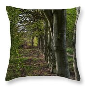 Forest Walk Hdr Throw Pillow