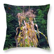 Forgotten Corn Stalks Throw Pillow