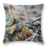 Forgotten Pine Cone 2 Throw Pillow