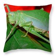 Fork-tailed Bush Katydid Throw Pillow