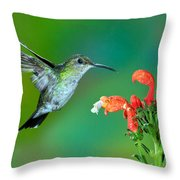 Fork-tailed Woodnymph Throw Pillow