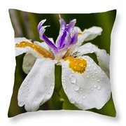 Fortnight Lily - African Iris Throw Pillow