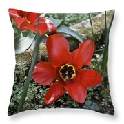 Fosteriana Tulips Red Emperors Throw Pillow