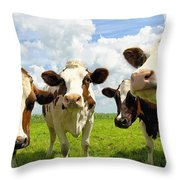 Four Chatting Cows Throw Pillow