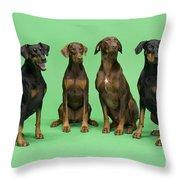 Four Dobermans Sitting Down Throw Pillow