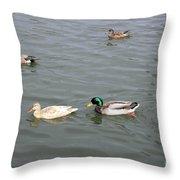 Four Ducks Throw Pillow